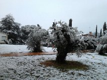 nevada 23 f 2013