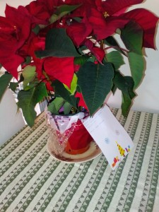 flor-de-nadal